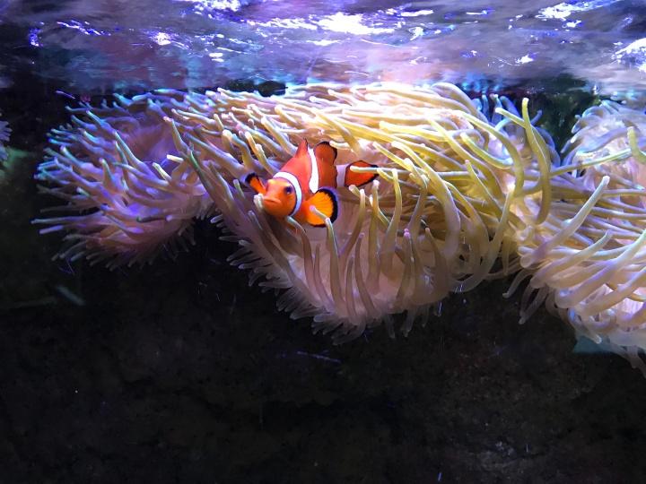 L'aquarium du Limousin : plongez dans un lieuunique